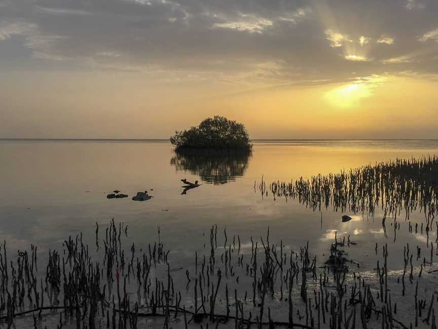sunrise in lahami mangrove area