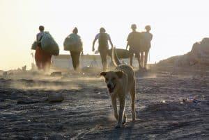 beachcleaning-und-hund