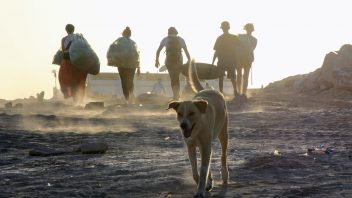 beachcleanup-und-hund